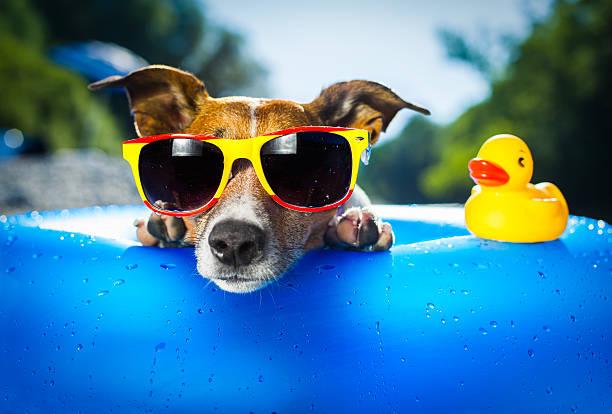 beach dog - 恢復精神 個照片及圖片檔