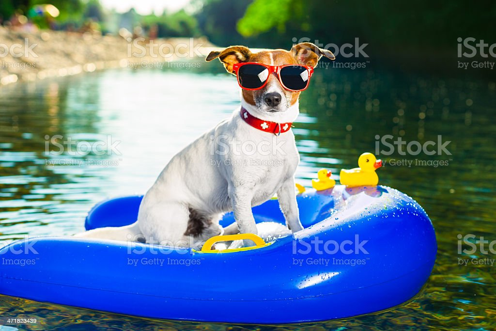 beach dog royalty-free stock photo
