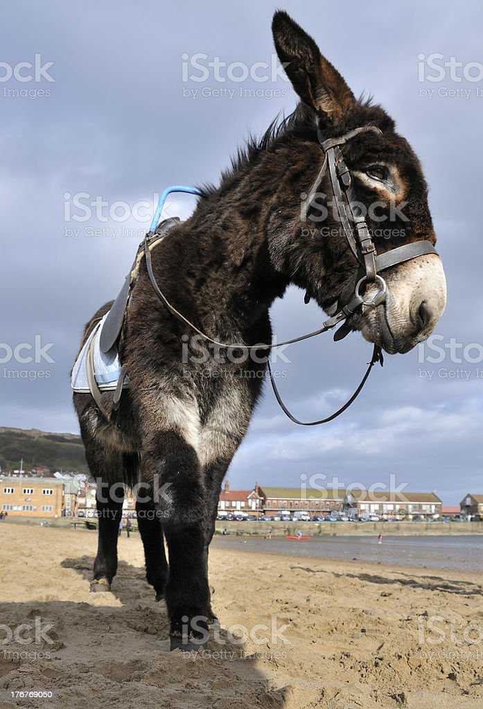 Beach Donkey stock photo