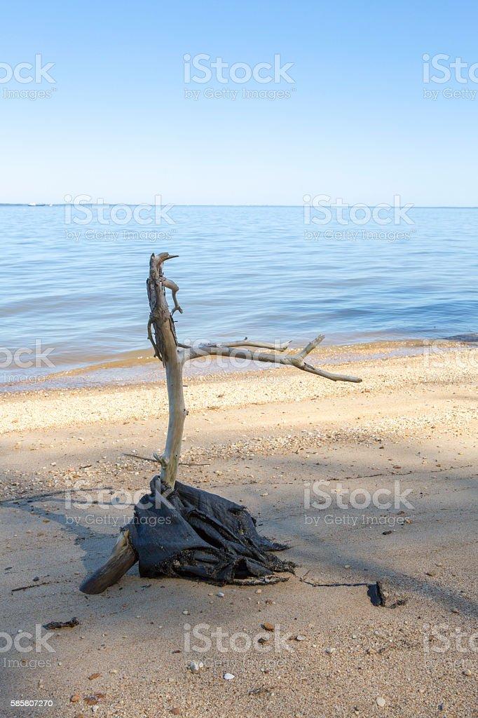 Beach Driftwood at shore of Marine River stock photo