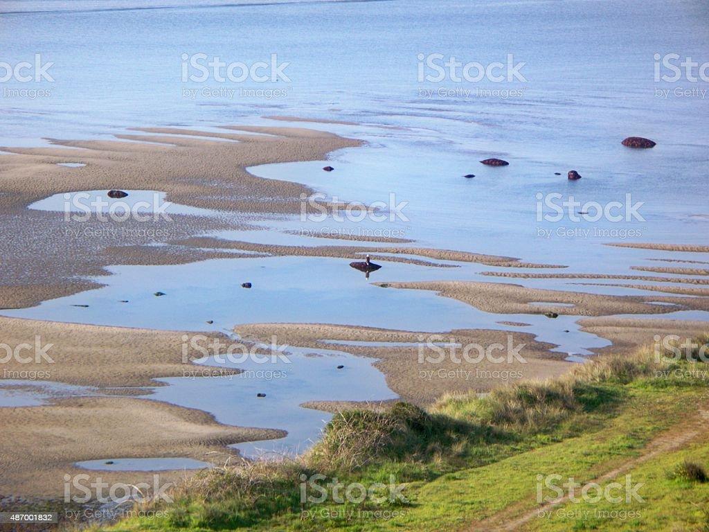 Beach Eagle stock photo