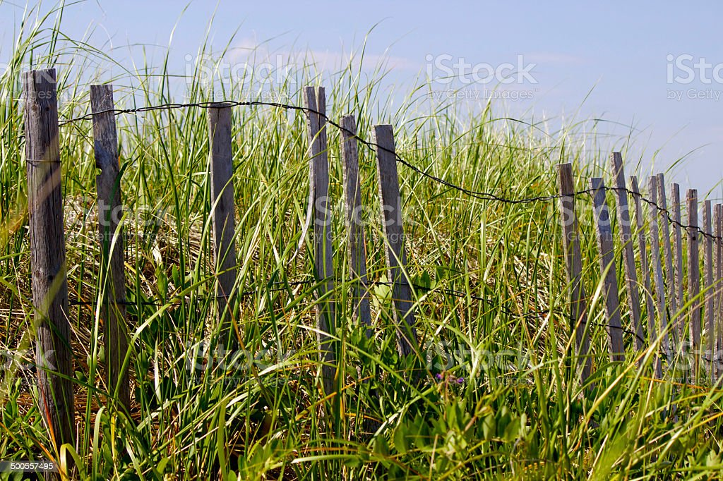 Beach Fence and Grass stock photo