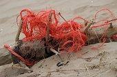 Beach flotsam/jetsam