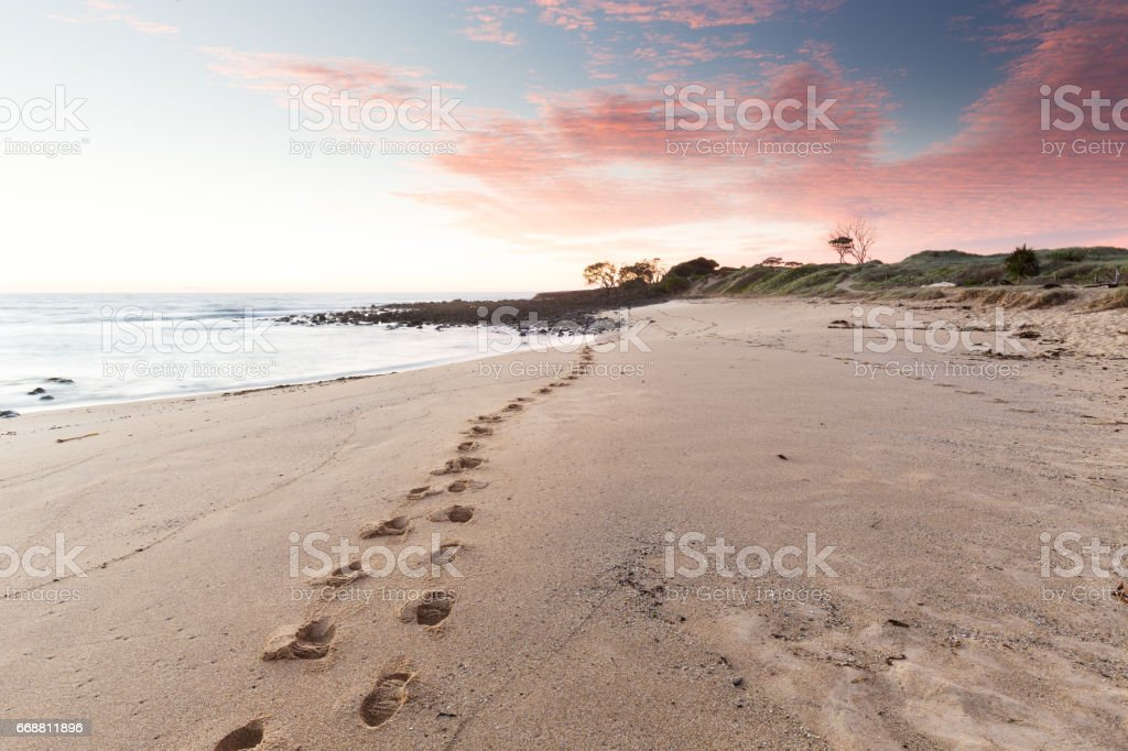 Beach Footprints Leading into a Pink Sunrise stock photo