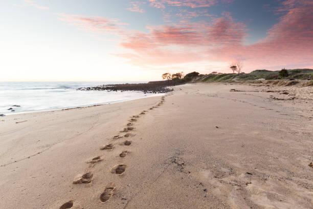 Beach Footprints Leading into a Pink Sunrise stock photo