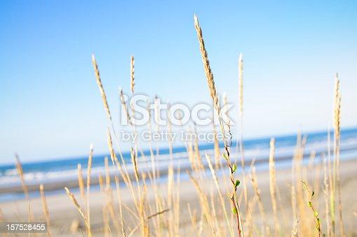 istock Beach Fresh 157528455