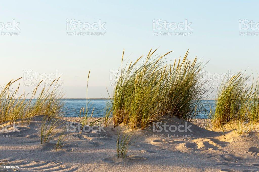 Beach Grass - Hörnum, Sylt stock photo