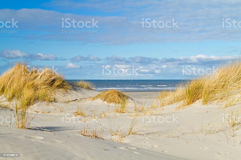Beach grass on dunes stock photo