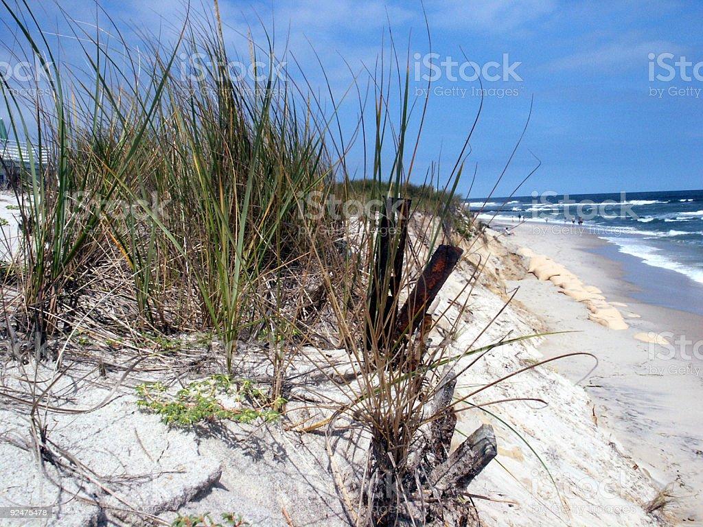 Beach Grass royalty-free stock photo