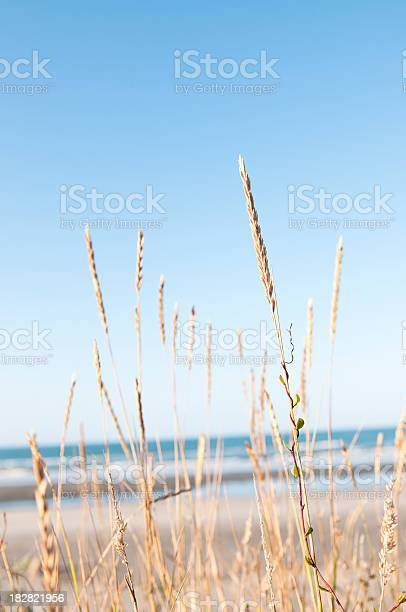 Photo of Beach Grass Tranquility