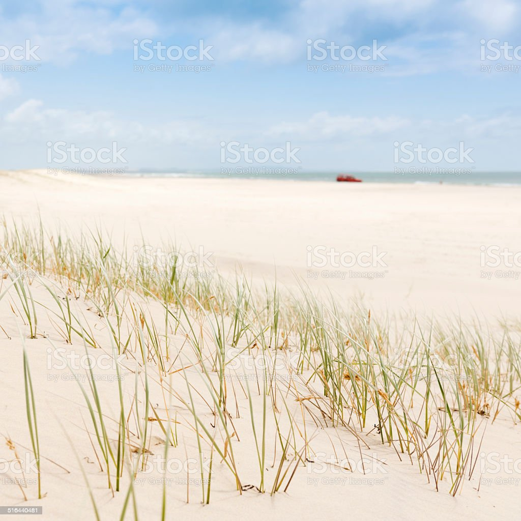 Beach Grass with 4WD stock photo