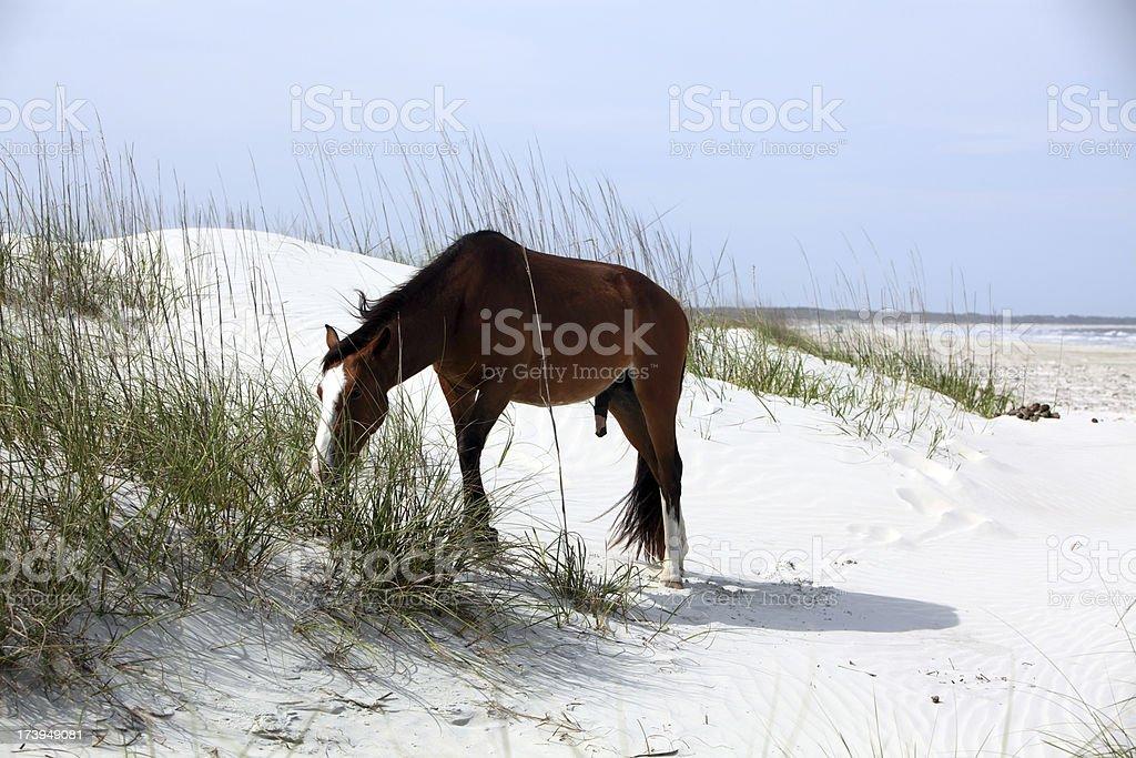 Beach Horse stock photo