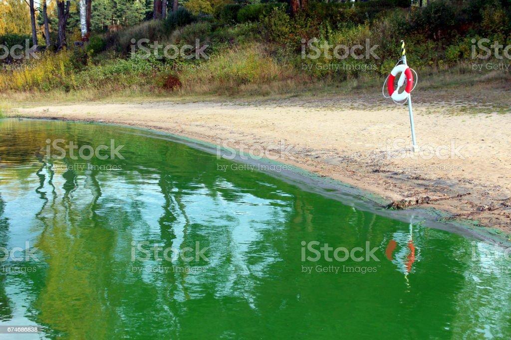 Strand in een zoetwatermeer met een dichte bloei van groene algen. foto