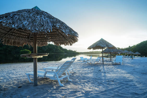Beach in Amazon jungle Beautiful sandy beach in Amazon jungle at sunrise rio negro brazil stock pictures, royalty-free photos & images
