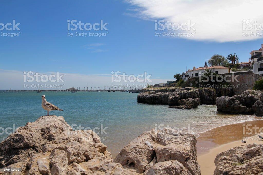 beach in Cascais near Lisbon, Portugal 免版稅 stock photo