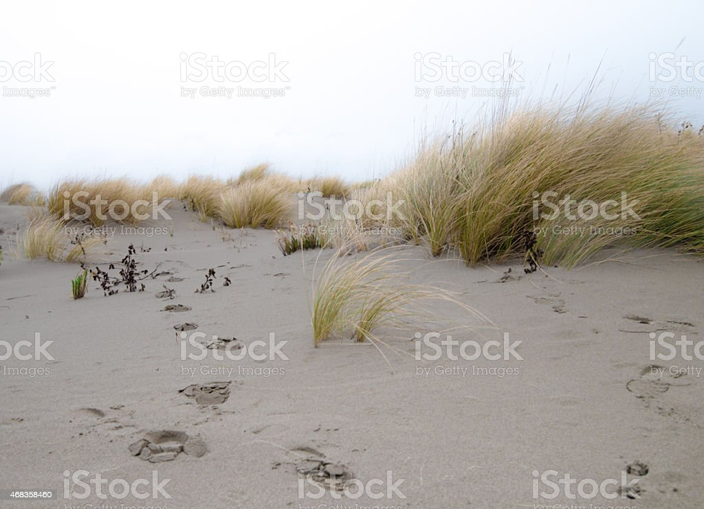 Beach in the wind royalty-free stock photo