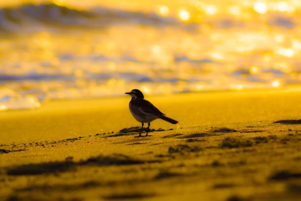 la plage est illuminée par le coucher du soleil et la silhouette d'oiseau - cage animal nuit photos et images de collection