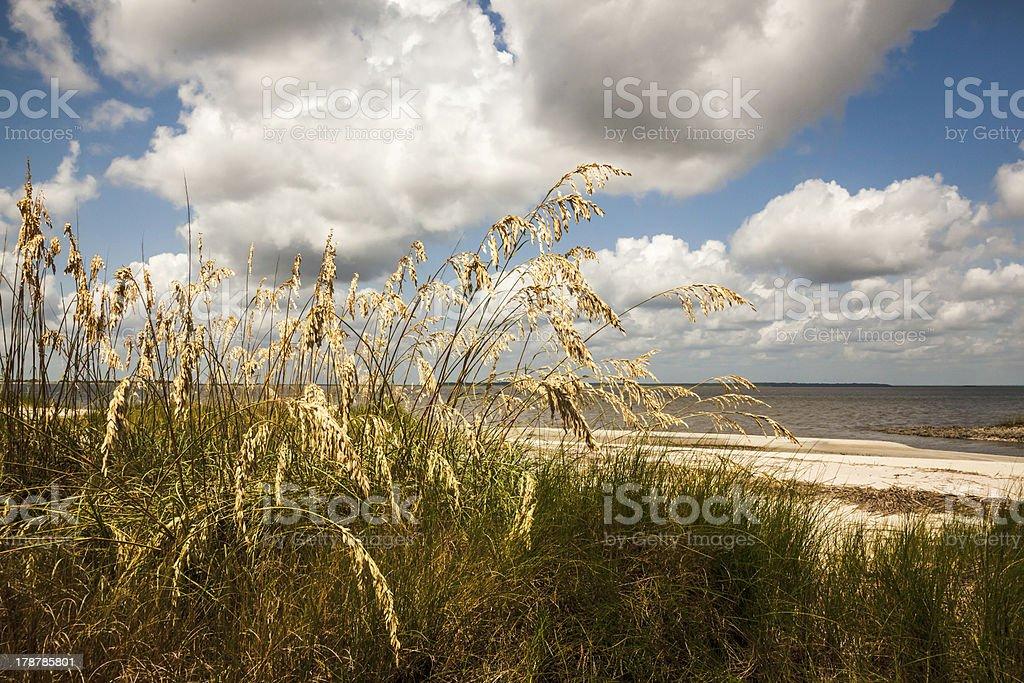 Beach Oats royalty-free stock photo