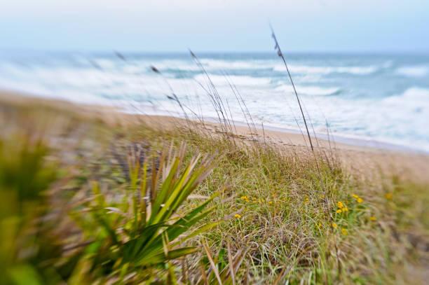 strand, meer und düne canaveral national seashore - palmwedel stock-fotos und bilder