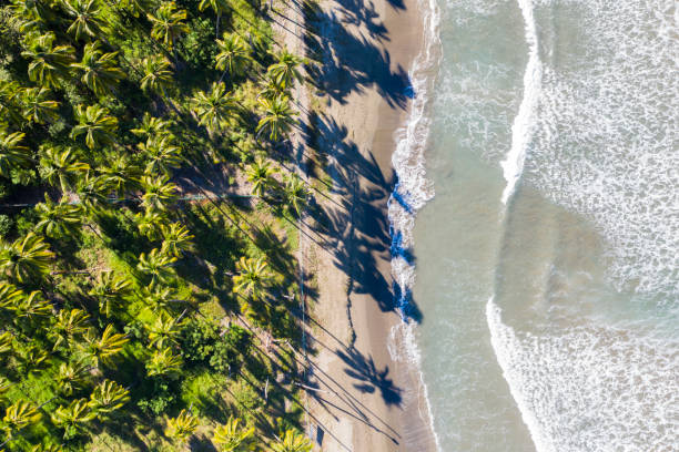Beach, Ocean Pacific
