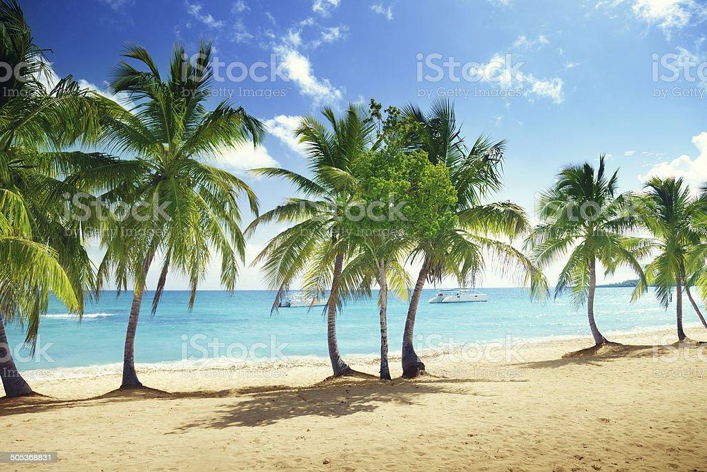 beach of Catalina island in Dominican republic stock photo