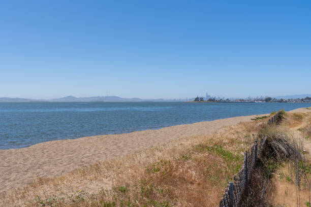 Beach overlooking San Francisco Bay Clear blue day at the Robert W. Crown Memorial State Beach in Alameda, California. City of San Francisco seen in the distance. alameda california stock pictures, royalty-free photos & images