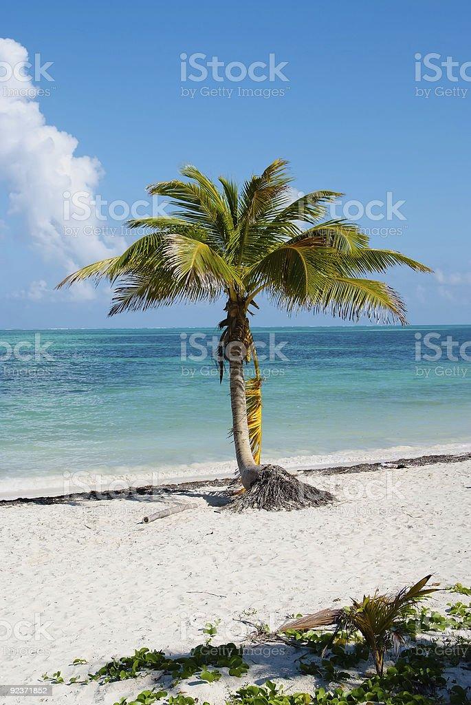 Beach palm royalty-free stock photo
