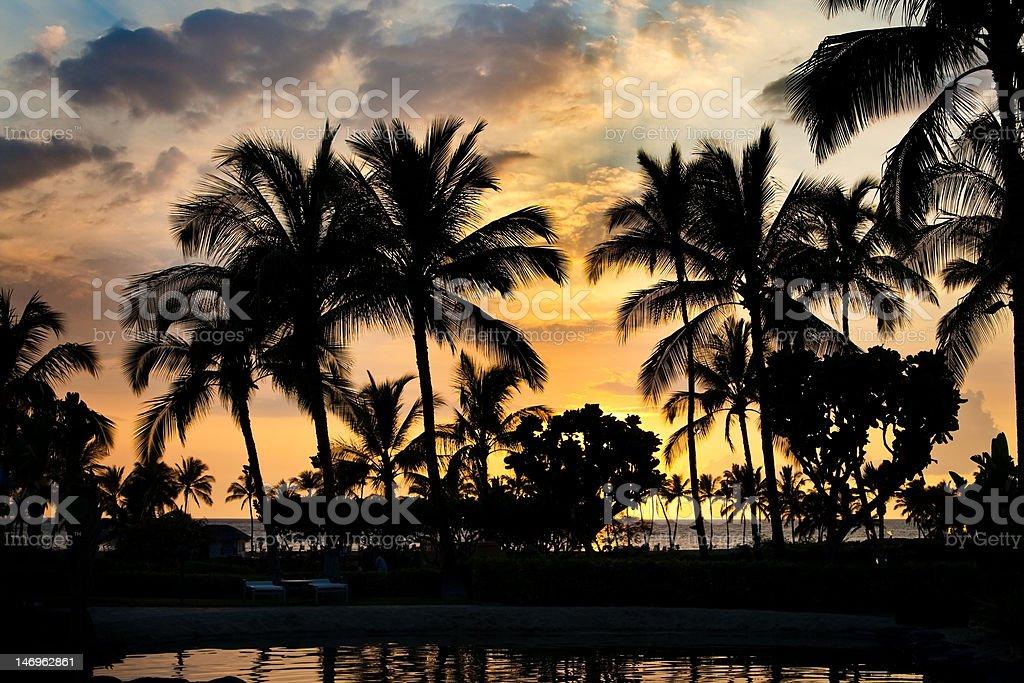 Beach palm silhouettes stock photo