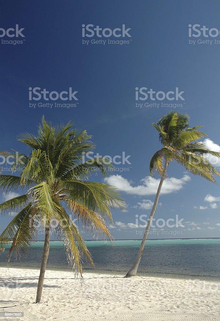 Beach - Palm Trees royalty-free stock photo