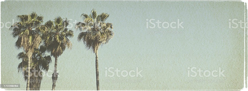 Beach Palms - Vintage Look Series royalty-free stock photo