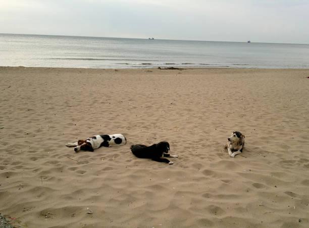 Strandurlaub stock photo