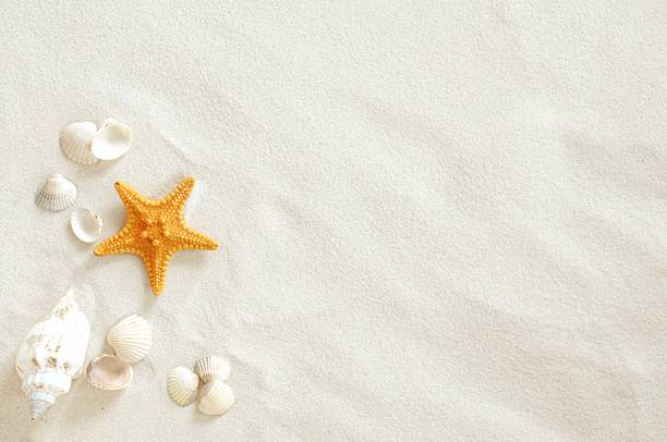 Beach Beach with a lot of seashells and starfish sand stock pictures, royalty-free photos & images