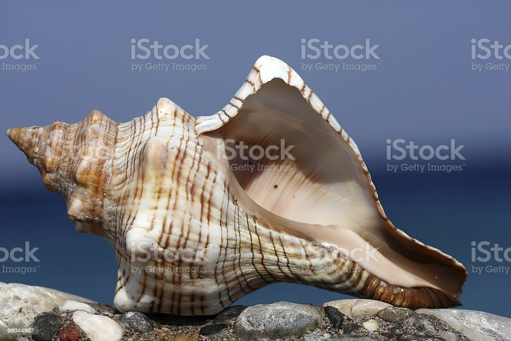 La spiaggia foto stock royalty-free