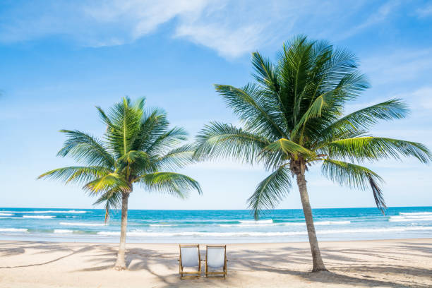 Beach Relax Palm Beach Tropical Relax Palm miami beach stock pictures, royalty-free photos & images