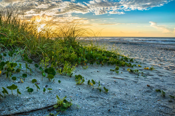 Beach Sand Dunes Leading to Ocean at Sunrise Beautiful sand dunes leading to beach ocean at sunrise. conway new hampshire stock pictures, royalty-free photos & images