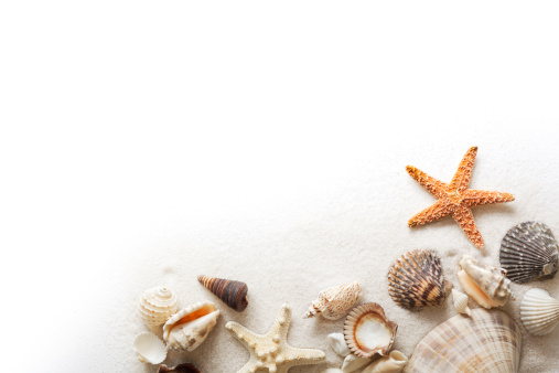 White beach sand, starfish, and a variety of seashells form a corner frame border. Sea life is arranged in a horizontal format, cut out and isolated on a white background with copy space. Cute crustacean animal shells group provides layout element for summer vacation, tropical climate, and fun togetherness concepts.