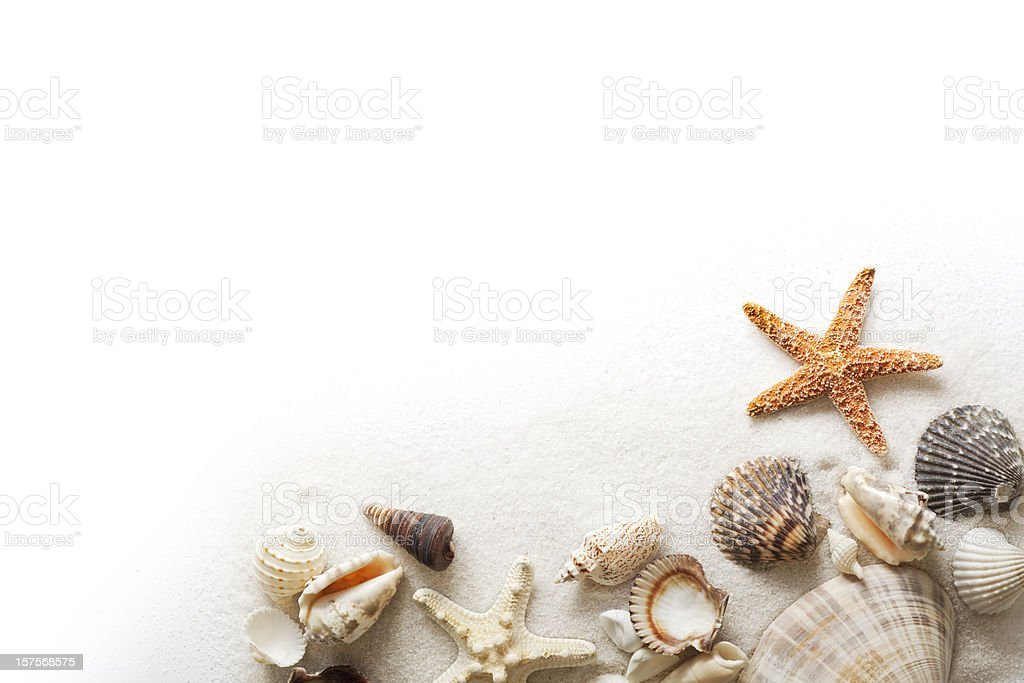 Beach Sand, Starfish, and Seashells Frame Border on White Background stock photo