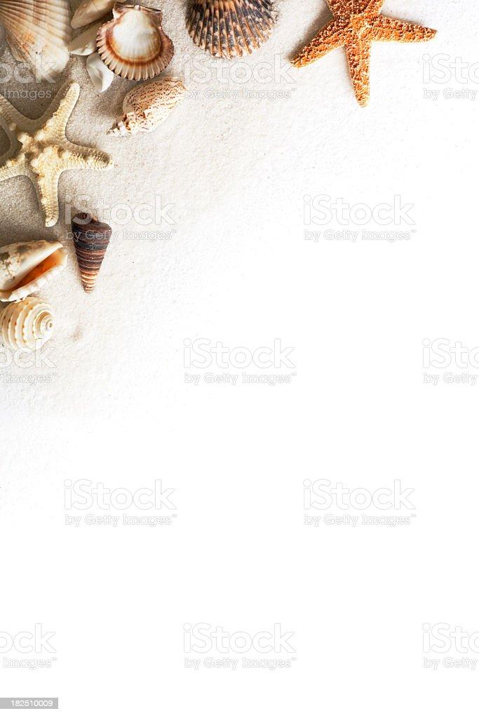 Beach Sand Starfish Seashell Frame Border On White ...