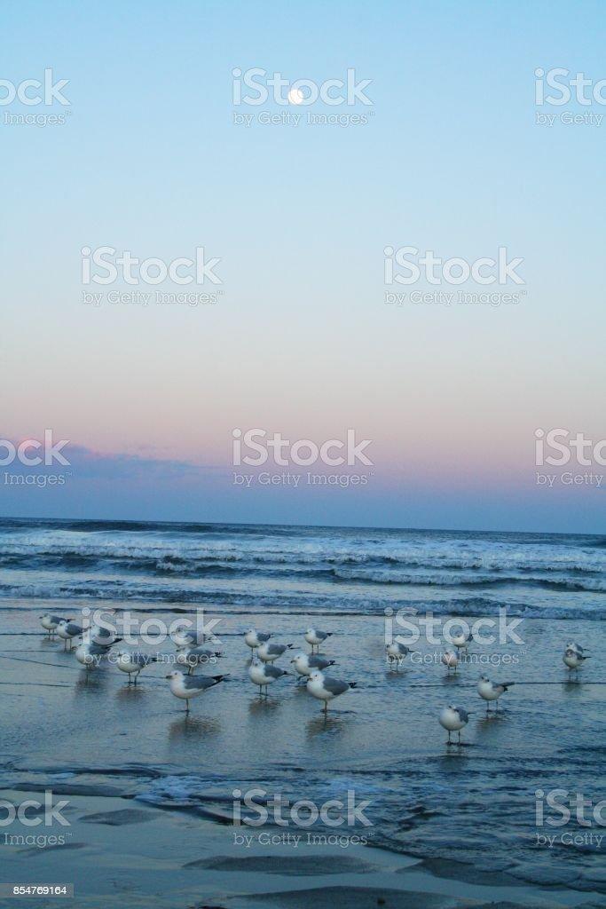 Beach, Seagulls, Sunset stock photo