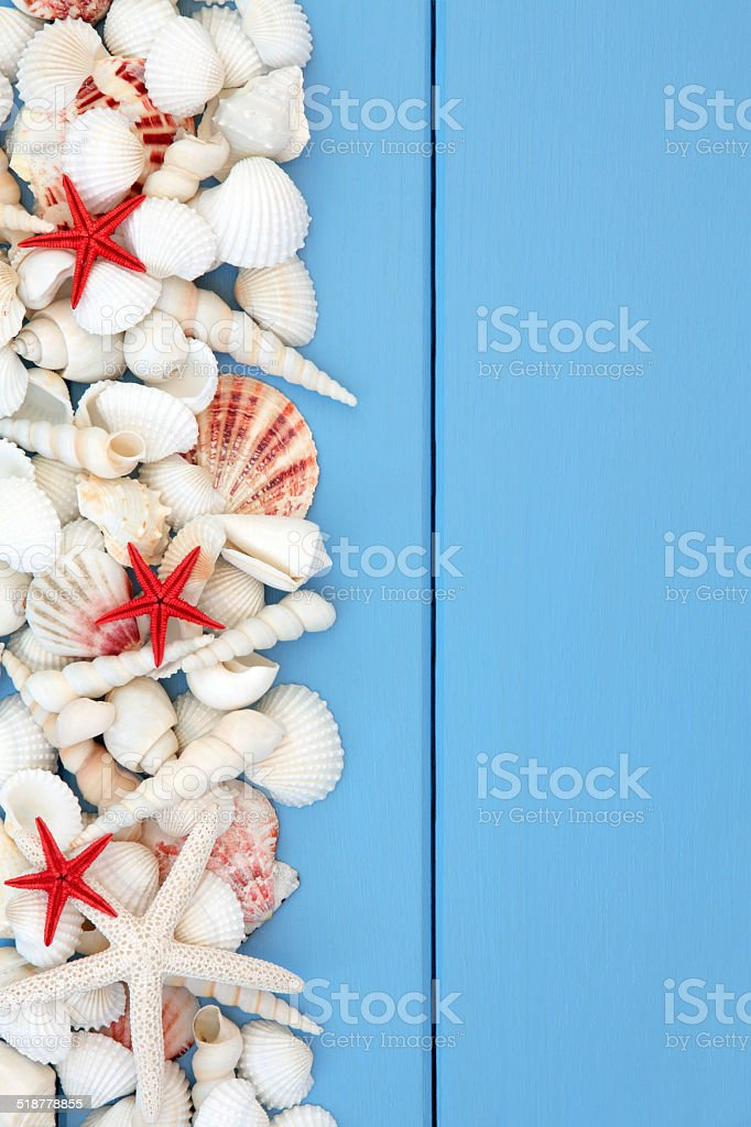 Beach Shell Beauty stock photo