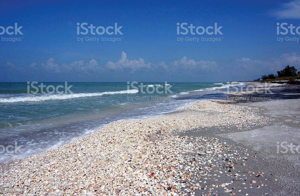 Beach shells stock photo