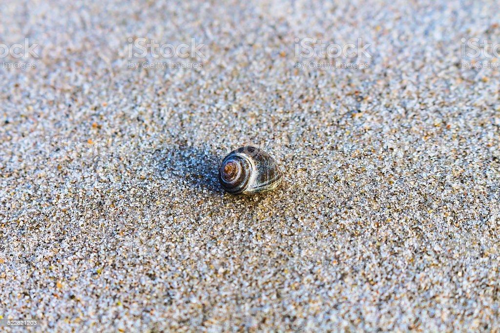 Beach Snail stock photo