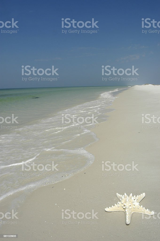 Beach Star royalty-free stock photo