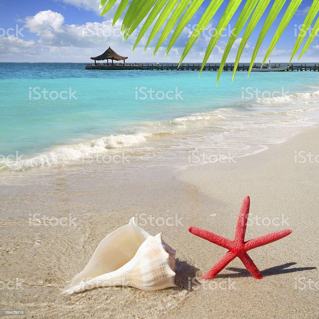 beach starfish and seashell on white sand royalty-free stock photo