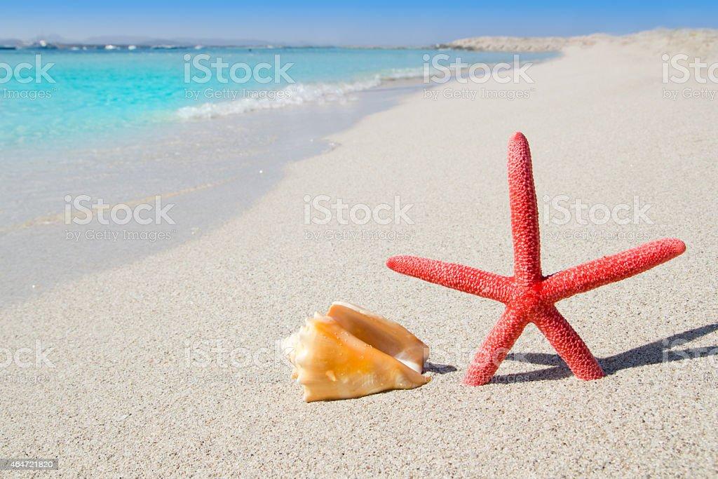 beach starfish and seashell on white sand stock photo