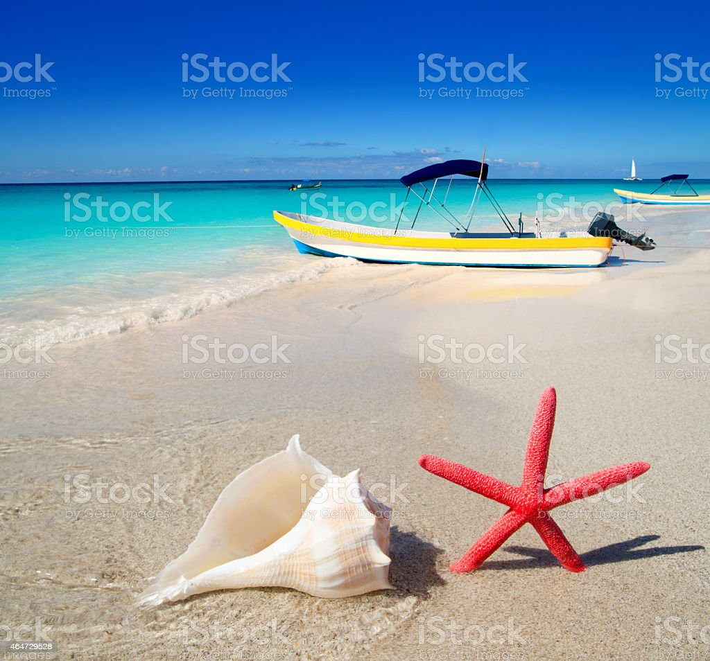 beach starfish and seashell on white sand stock photo