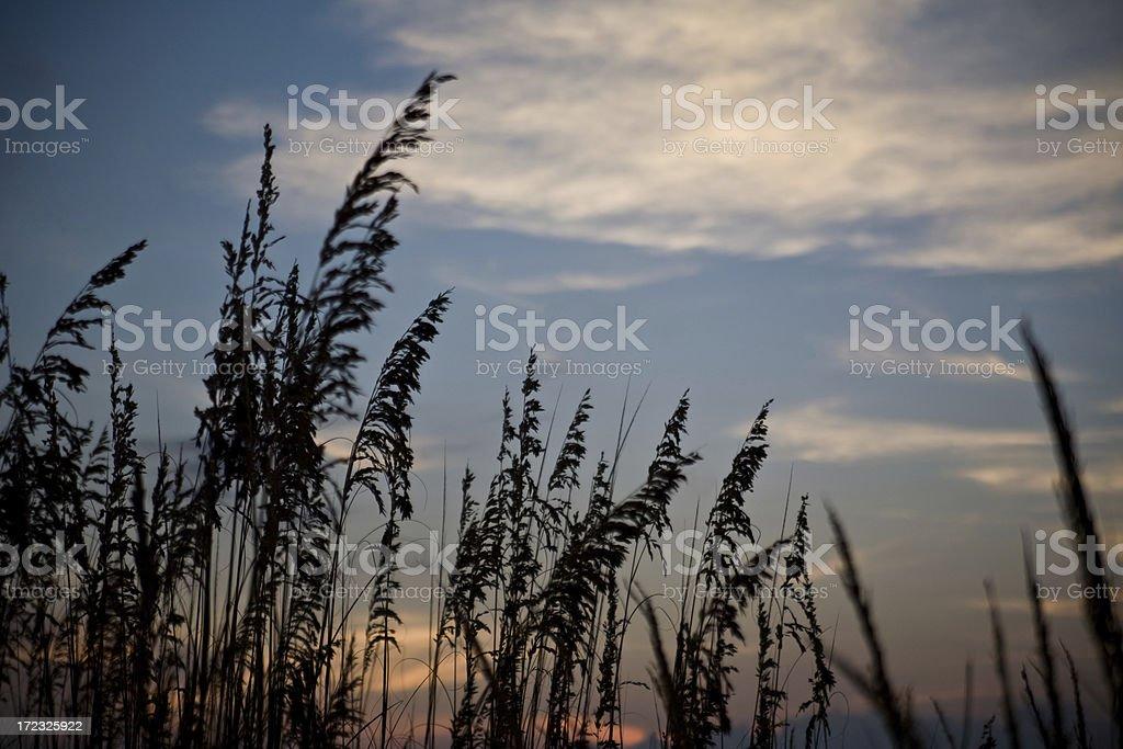 Beach Sunset Cape San Blas royalty-free stock photo