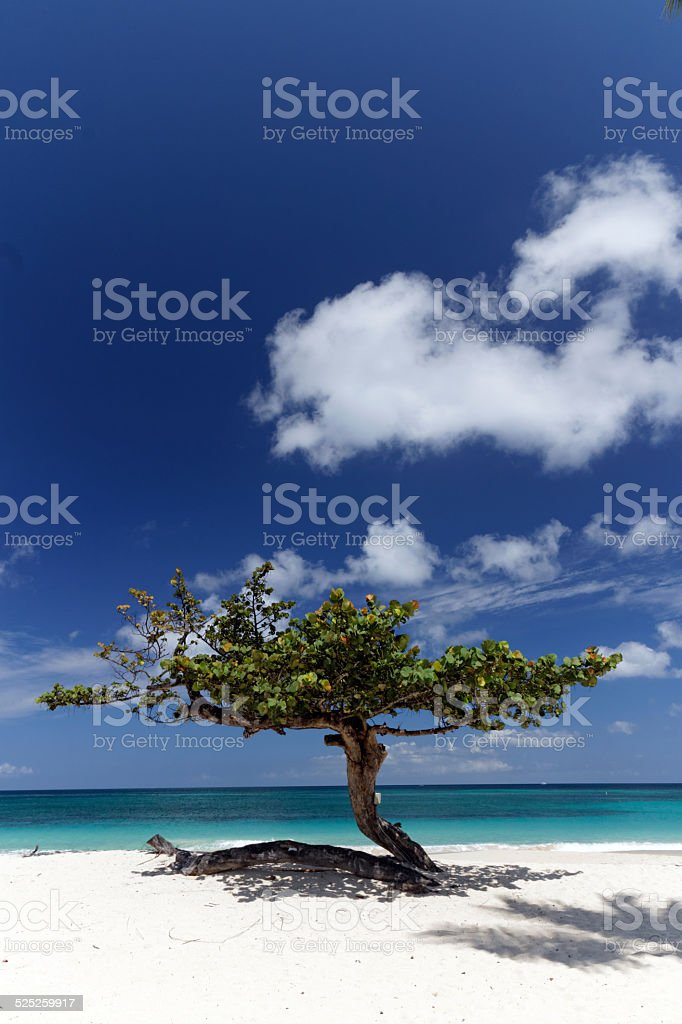 Beach Tree stock photo