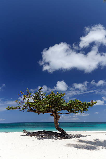 Beach Tree stock photo