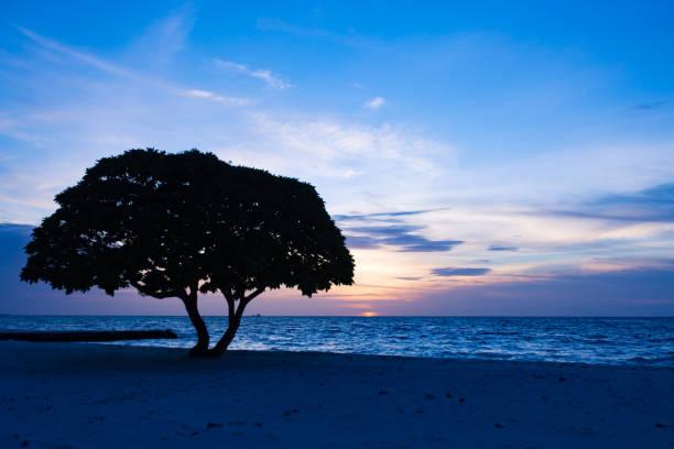 Beach Tree Sunset stock photo